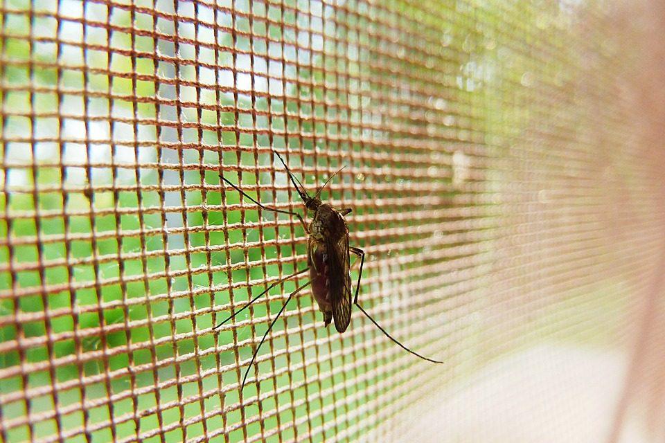 mosquito-19487_960_720
